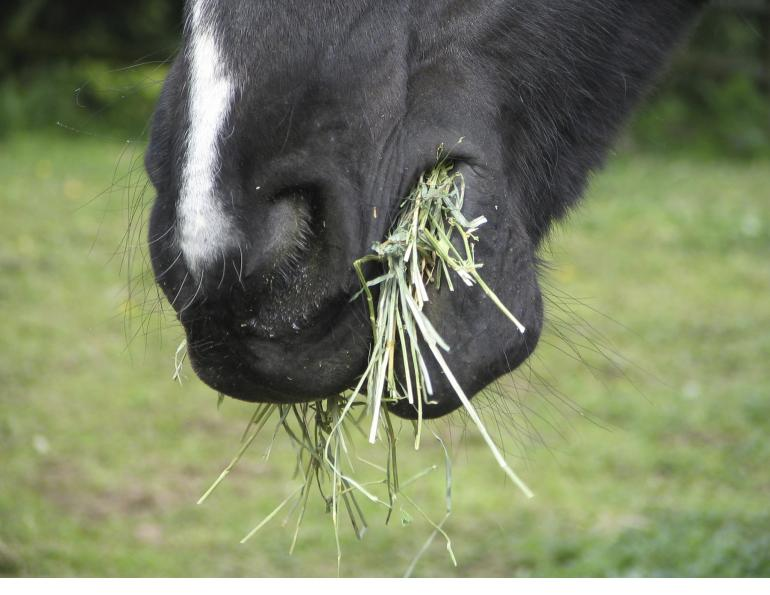 Juliet Getty, hay analysis, horse hay, eqine omega 3, equine omega 6, equine carbohydrates, equine protein, equine minerals, nutrition horse, hay testing, getty equine nutrition, horse's digestive tract, equine digestion, dr. getty's book