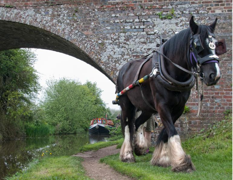 working horses, barge horses, jobs with horses, horses with jobs, margaret evans horse