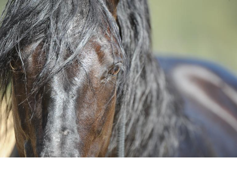 jonathan field training articles, natural horsemanship softening horse, how to create a soft supple horse