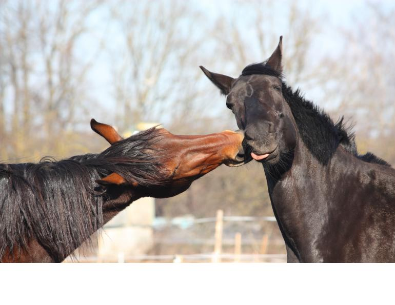 how to keep my horse healthy and happy, equine guelph, international society for equitation science (ISES), hartpury equine science