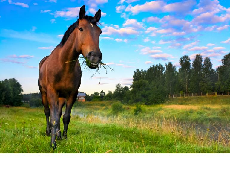 horse vitamin e equine nutrition Shelagh Niblock, PAS sources vitamin E equine diet vitamin e supplements for horses, how much vitamin e does my horse need