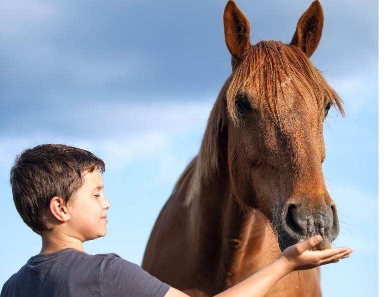 horses children, horses kids, equine therapy, horse therapy, Washington State University, National Institutes of Health, Sue Jacobson, Phyllis Erdman