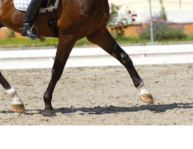 Equine Lameness, western college of veterinary medicine, wcvm, horse lameness, game ready, equine ultrasound, equine heel pain