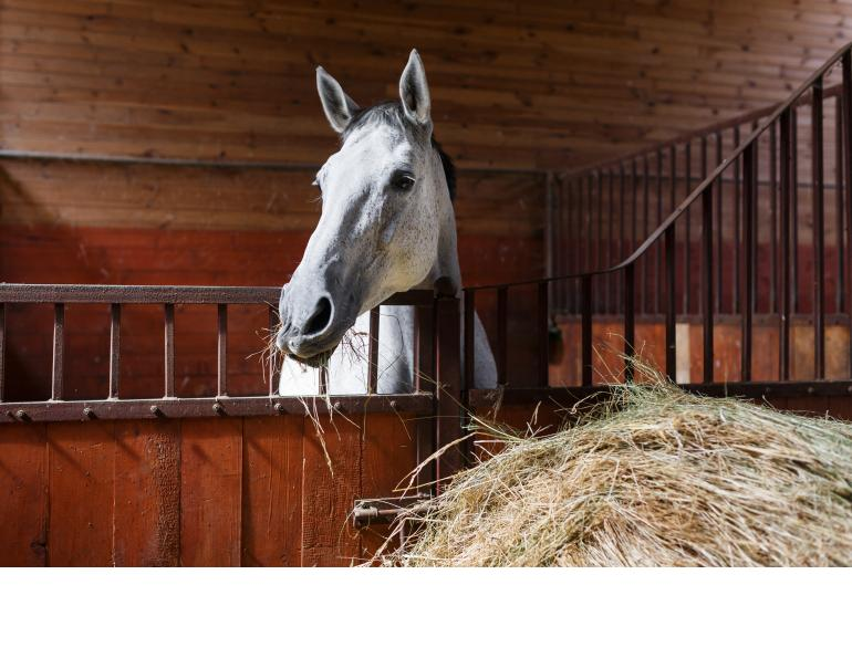 Horses heaves equine guelph study heaves Humans asthma horses