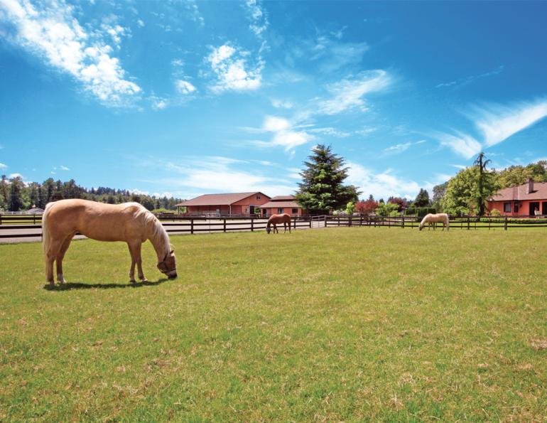 buy a horse property, horse properties canada, equestrian properties canada, how to buy a horse farm, owning a horse