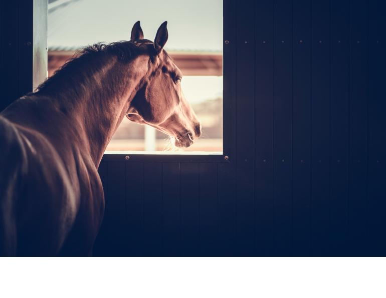 stalled horses impact health, are horses okay isolated, alice ruet equine science mark andrews, housing horses in individual boxes