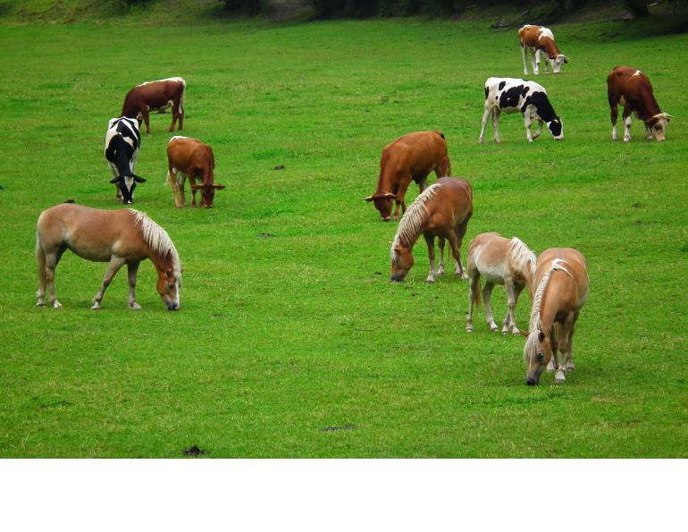 can you put horses and cattle together, can horses and cows share grass, equine parasite control, deworming horses, preventing worms in horses