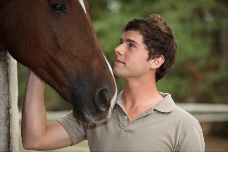spoiled horses, will clinging, nervous horse, scared horse, difficult horse