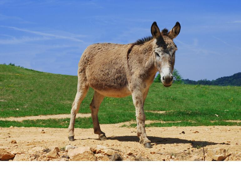 mark andrews equine science update, the donkey sanctuary, what climate do donkeys like, how are donkeys different from horses and mules, university of portsmouth applied animal behavioural science