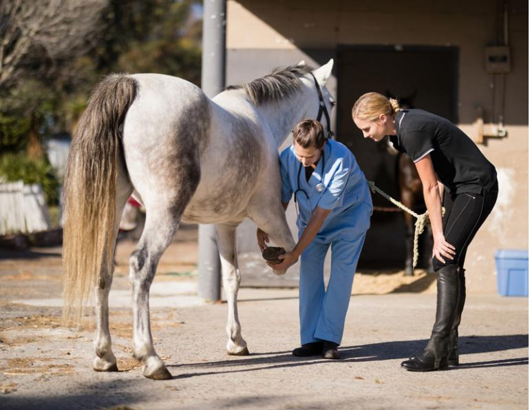 injured horse, trick training horse, non-riding horse activities, teaching horse manners, jonathan field, how to handwalk a horse
