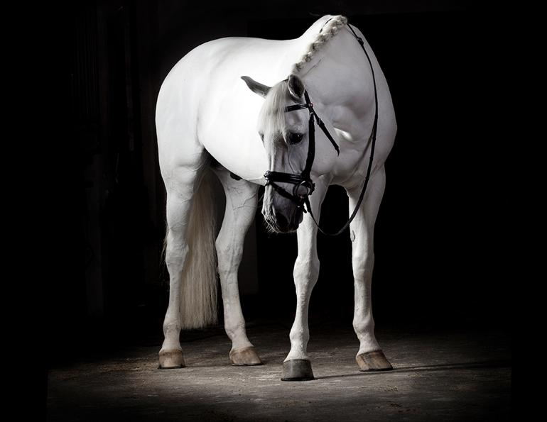 exhibitor's grooming, how to get your horse really clean, quic brand, quic silver