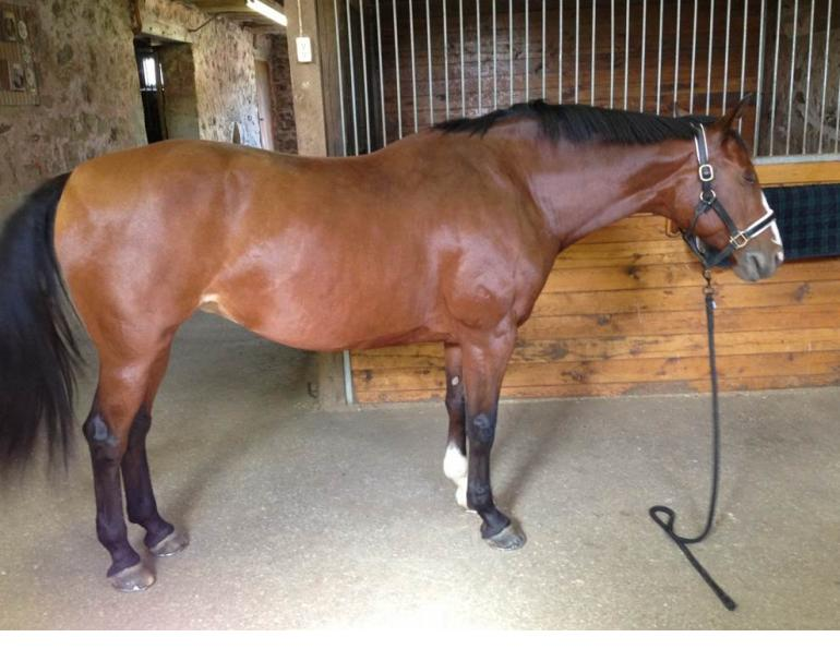 horse shoeing, equine shoeing, horse trimming, hoof trimming, horse stifles, hanz wiza, hoof problems