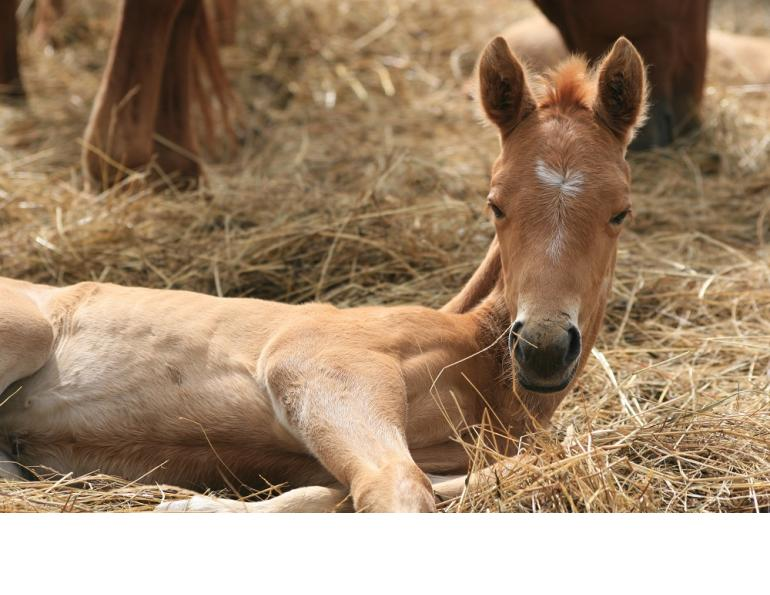 How to Care for Your New Foal