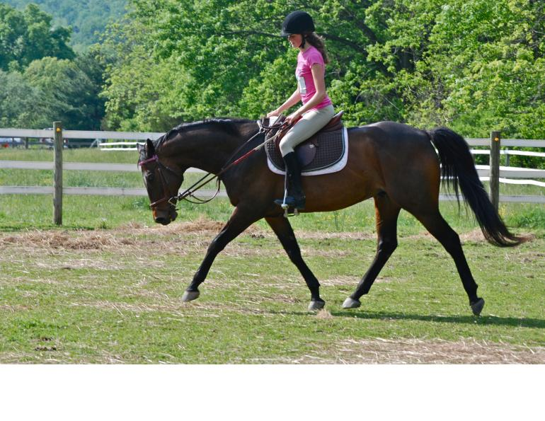 horse stretching in trot