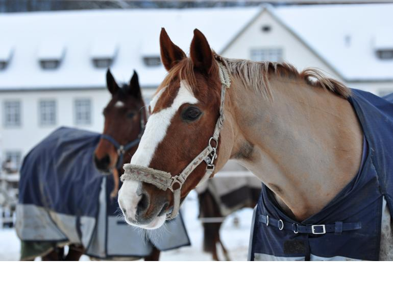 Winter TLC for Horses with Arthritis