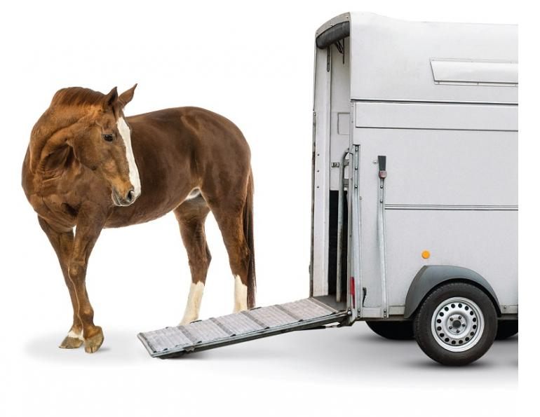 Inside Your Horse Trailer, horse to transport my horse safely, what type of horse trailer should i buy, best horse trailers, shipping fever, pleuropneumonia, kevan garecki