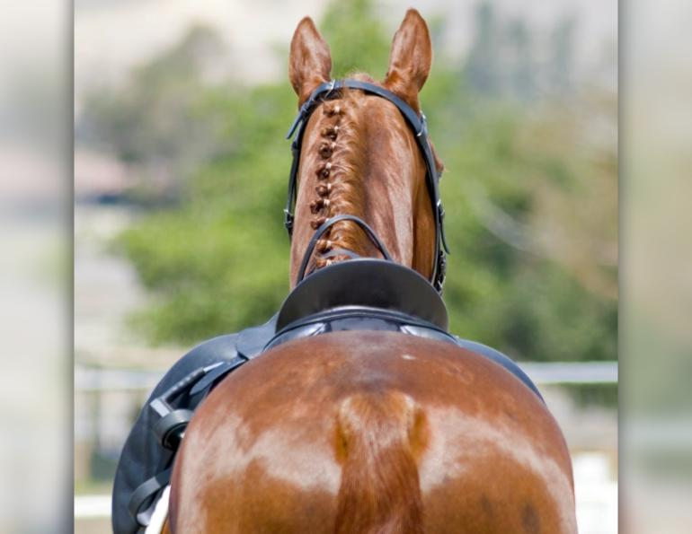 saddle fit, equine guelph, assymetries saddle fit, how to fit my saddle