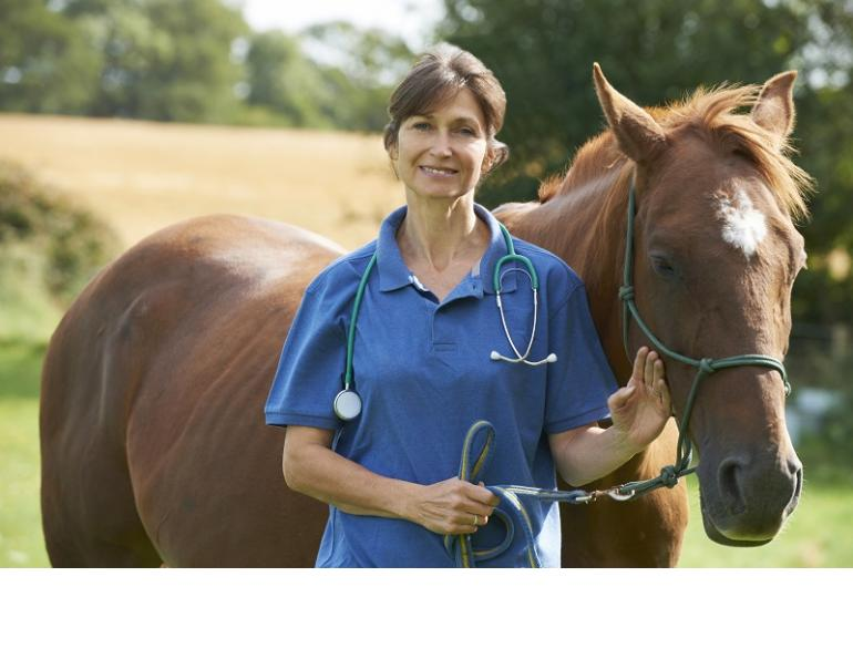 The Equine Heart, what should my horse's heart rate be, what is a normal rhythm horse heart, equine electrocardiogram, heart rate variability horse