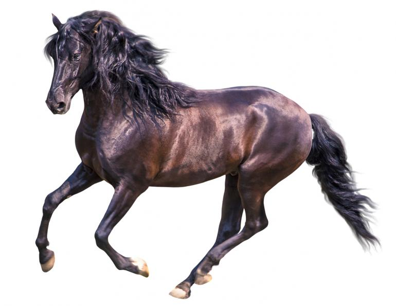 straight arrow mane n tail, how to get high-gloss coat for my horse, quality horse shampoo and conditioner
