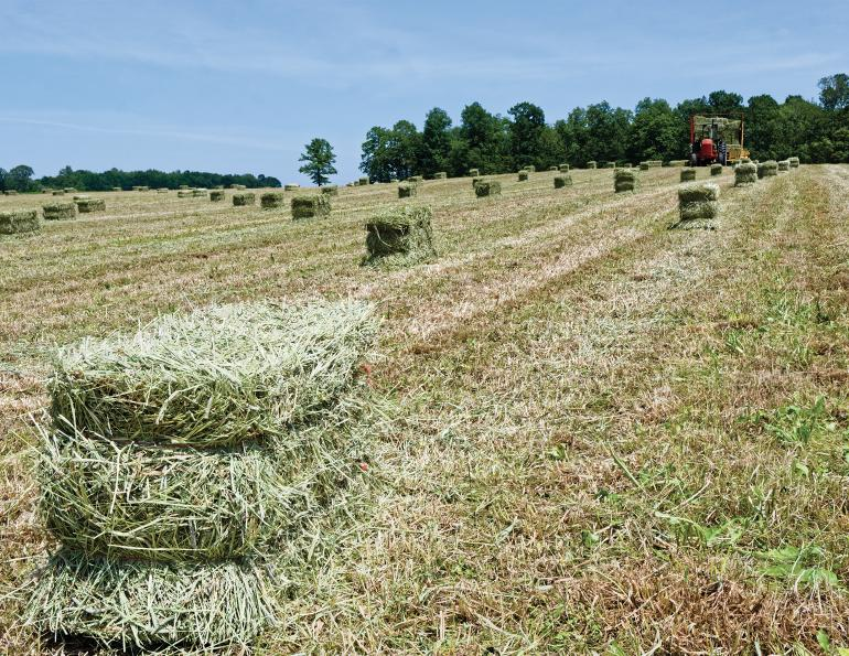 drought in canada, hay shortage canadian horse industry, finding good horse hay canada, reduce horse hay waste, drought horse industry