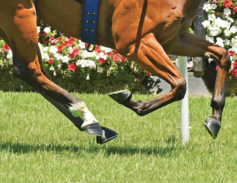 how to determine good hoof health, are my horse's hooves healthy, how to achieve healthy hooves, biotin promotes good hoof health