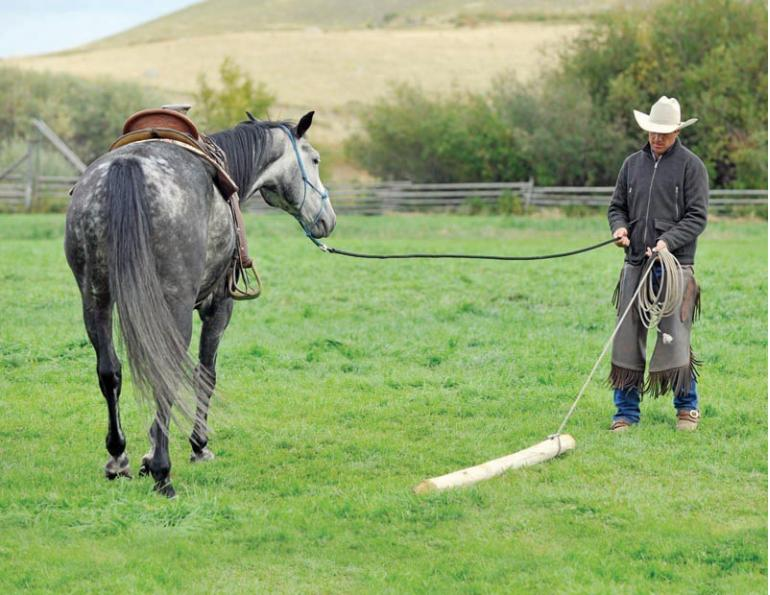 horse groundwork, Build Your Horse's Confidence with jonathan field, natural horsemanship, exercises with horses, jonathan field dragging a log, horse confidence