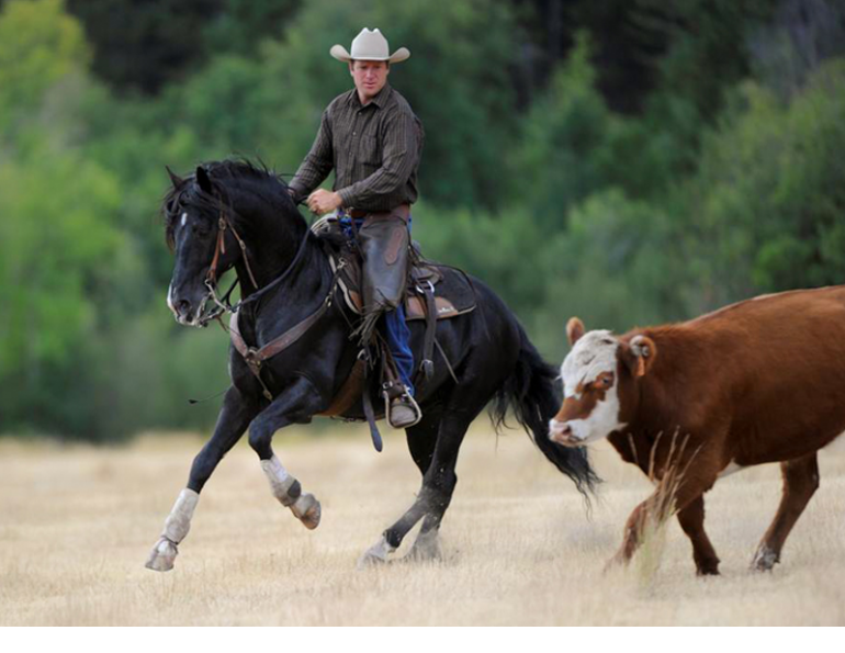 Jonathan Field, control your horse, equine Ground Skills horses, horses controlling steer, natural horsemanship, connecting with your horse, horses working cows