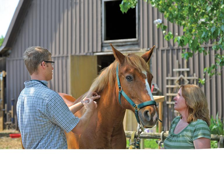 how to vaccinate horse, spring equine vaccinations, why vaccinate horse, equine dentists, why do horses need dental care, equine dentist visit, parasite control horse, deworming my horse, euqine soundness evaluation, spring vet visit horse, how to care for my broodmare, equine reproductive examp, dr. lauren macleod delta bc