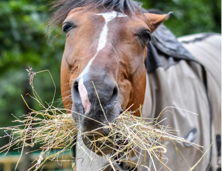 best way to soak hay, horse feed management practices, how to find higher quality horse forage, advantages of steaming horse hay,