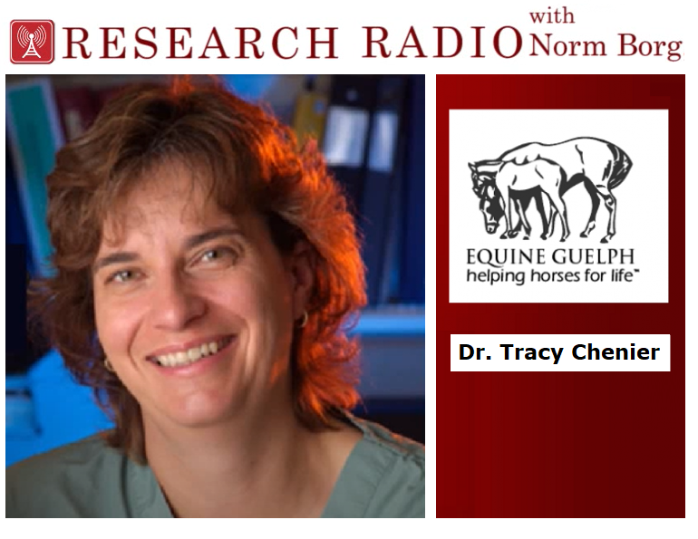 dr tracy chenier equine guelph podcast, prepping mare for breeding, prepping stallion for breeding