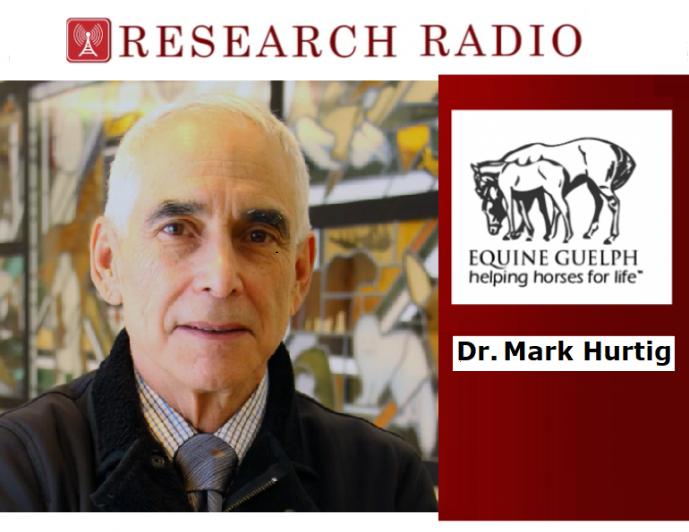 equine guelph research radio, dr. mark hurtig veterinary college, therapies equine lameness