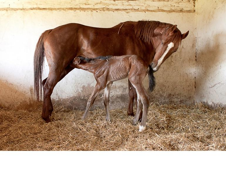 Why is colostrum important for foals, mare and foal colostrum, mare's colostrum, Juliet getty, equine immunoglobulins horse, why do foals need colostrum, nutrition for foals, equine foal nutrition, feeding a new foal