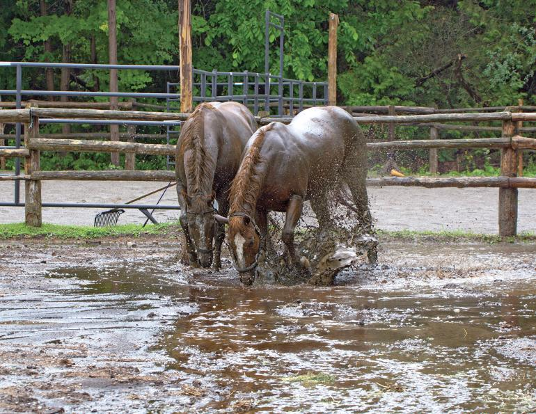how to deal with horse farm mud, managing muddy horse farm, how to control manure management, managing horse manure