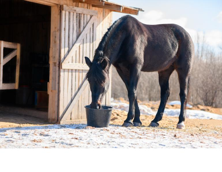 prevent colic horse, equine colic in winter, is horse getting enough water, national code of practice equines, equine guelph colic risk rater