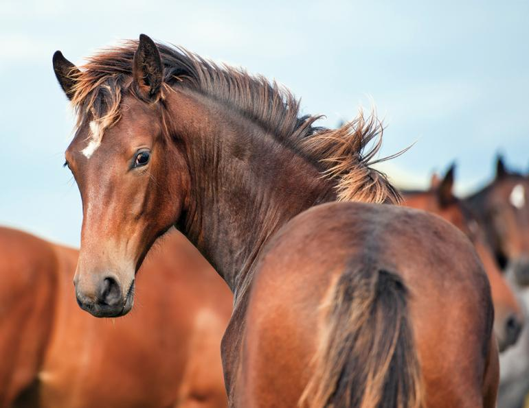 feeding a foal, food for a colt, filly nutrition, horse nutrition, growing horse, shelagh niblock