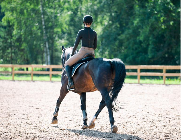 best books on riding, the art of teaching riding, equine professional manual, certified horsemanship association books, cha manuals