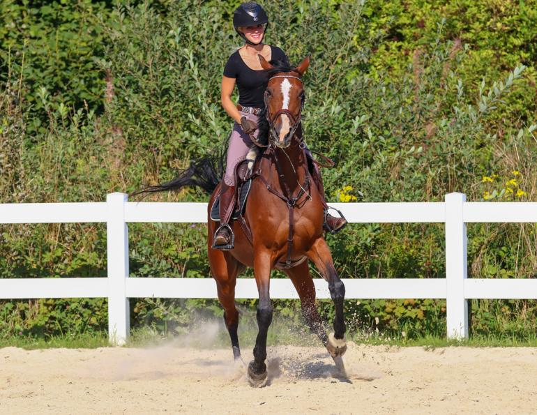 how do i deal with a difficult horse? will clinging advice on training, my horse is spooky, my horse overreacts, how do horses learn?
