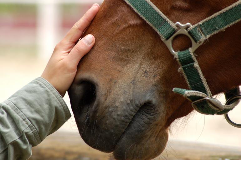 Therapeutic Riding Not Stressful For Horses, equine anxiety, horse anxiety, therapeutic riding good for horses, ptsd therapy horses