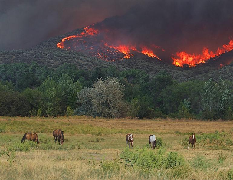 wildfires horses, evacuating horses wildfires, horses injured fires