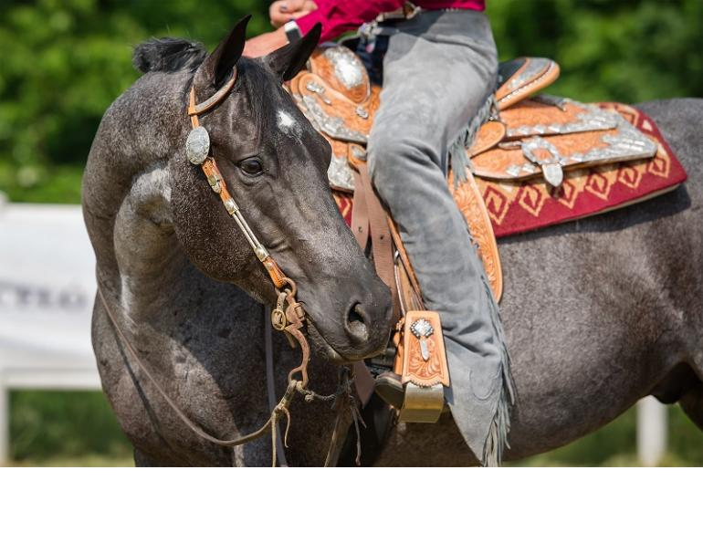 how can i keep my horse fit, how can i condition an old horse, dr kirby pentilla, conditioning older horse, caring for an older horse, joint injections horse, senior performance horse