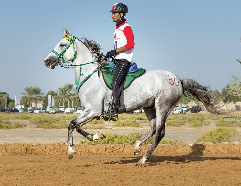 horse heart rate endurance, study on equine heart rates, healthy horse hrrecovery hr resting, equine science update