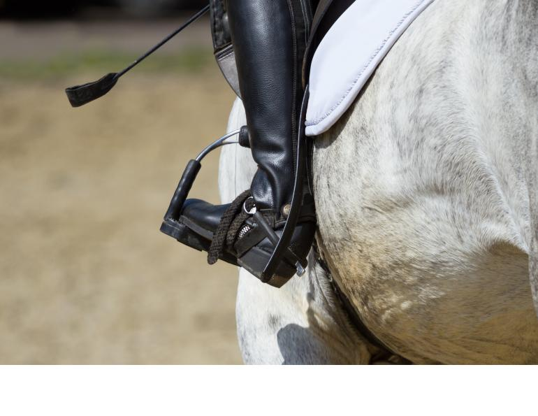 how to use a horse whip, whip usage equestrian sports, british show jumping, hartpury college conference, equine guelph on whips