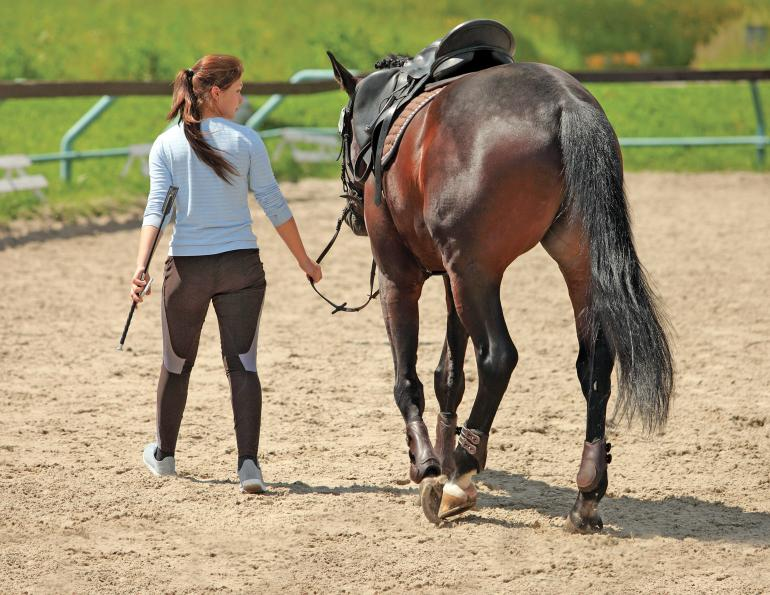 Equine Neurological Dysfunction, Equine Neurological diagnosis, equine Neurological treatment, equine lameness, equine spinal nerves, equine acupuncture