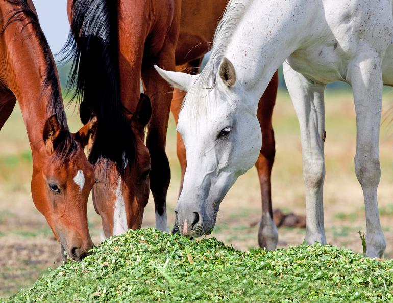 switching horse forage, switching to a new hay for horse, equine portal, jackie bellamy-zions, how to transition horse to new hay