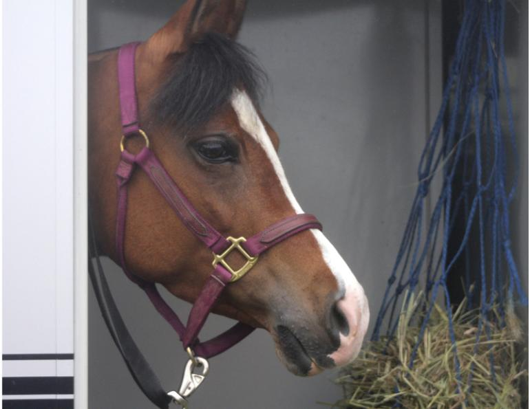 Transporting Horses with Fractures, Washington State University, horse veterinary, signs of fracture horses, sudden horse lameness, stabilize broken horse leg, horse care
