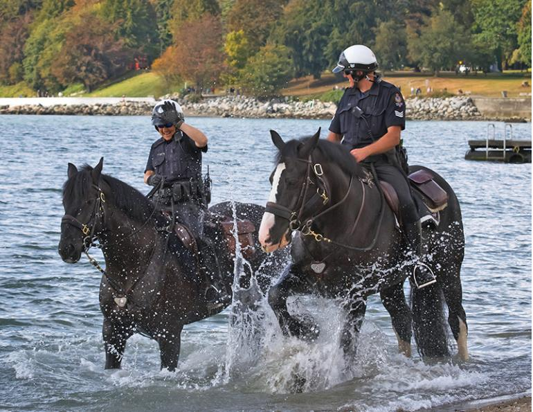 vancouver police mounted unit, stanley park police horses