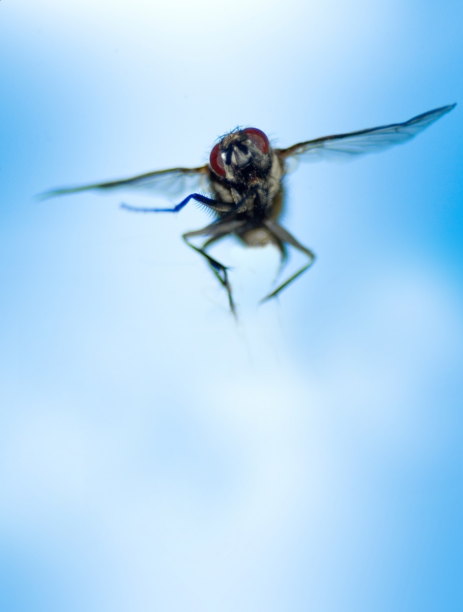 how to attract flies to kill them