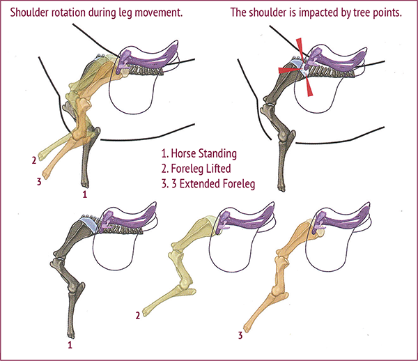 Equine Symptomatic Lameness, Why is my horse lame? Why does my horse keep stumbling? Why does my horse trip over his own feet? Symptomatic lameness right hind leg, detecting Equine Symptomatic Lameness