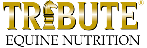 equine protein horse protein horse's diet tribute equine nutrition, horse feeds crude protein equine amino acids horse