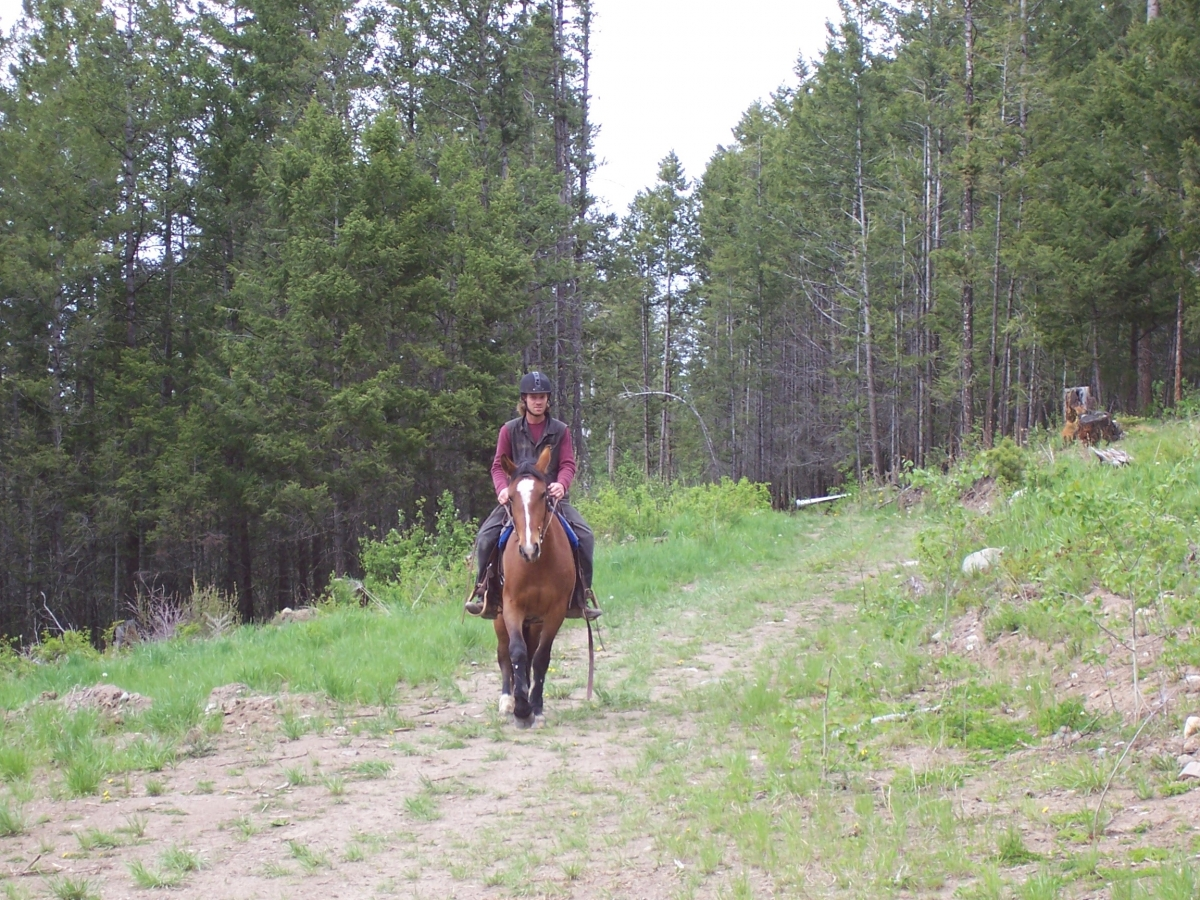 Riding Green Horse, Will Clinging, horse riding tips